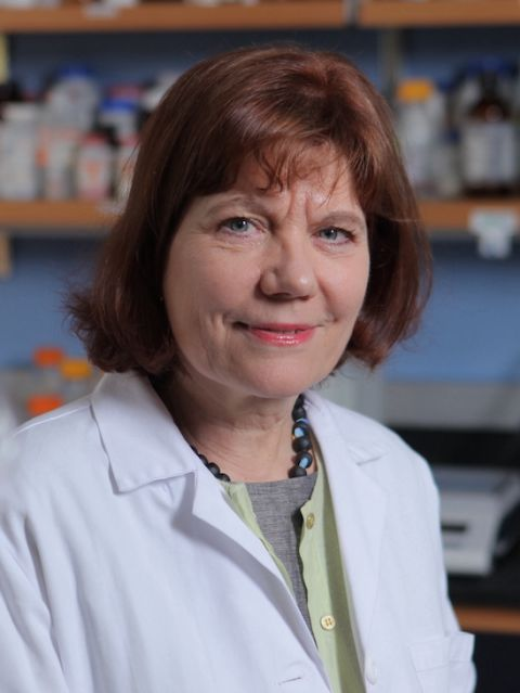 Dr. Heidi Stuhlmann
